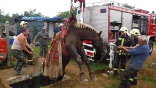 Ezt a nyíregyházi lovat egy kicsit megtanították repülni is