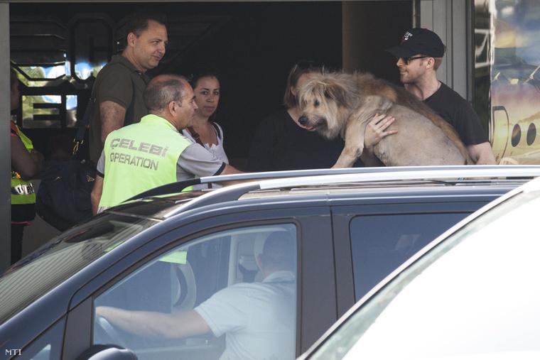 Az érkezés pillanata. Ryan Gosling és kutyája mellett a kép bal oldalán Adam Goodman, a Mid Atlantic Films alapítója látható.