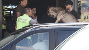 Ryan Gosling kutyája legalább akkora sztár, mint Ryan Gosling