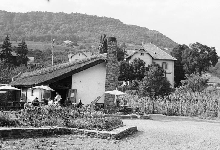 A Poharazó 1959-ben