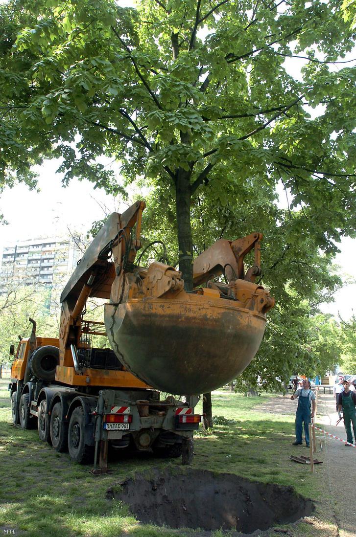 Kilenc éve így ültették át a fákat