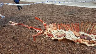 Rémes fotókkal keltették a Loch Ness-i szörny halálhírét