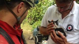 Elit mentést kapott három kismacska Budafokon