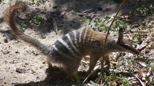KVÍZ! Tudja, hogy hívják ezeket a fura, de cuki állatokat?