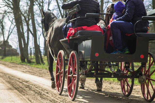 Szentmihálypusztai Lovastanya - lovaskocsis programok is vannak