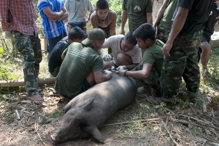 Sérült lábának amputálását gyakorolják egy halott disznón a Free Burma Rangers önkéntes katonái Mianmarban, 2011. jaunár 17-én.