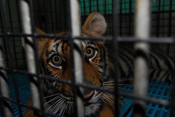 400 tigrist tartanak itt fogva