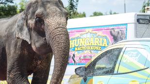 Látott már ön autómosó elefántot?