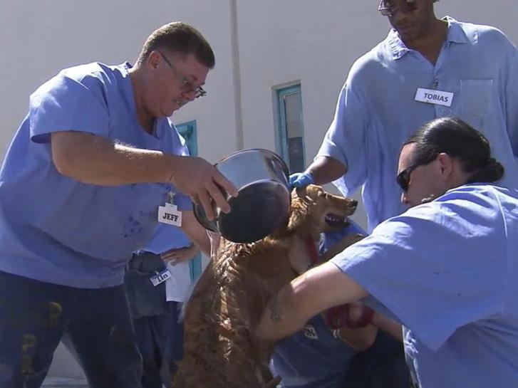 ABC prison dogs 2 er 160729 4x3 992