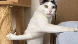 Látott már macskát ilyen hülye pózban?