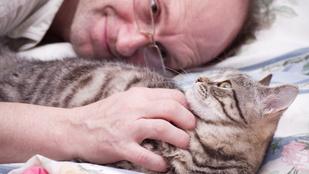 Apa megette a marihuanás sütit, aztán a földön fetrengve leribancozta a macskát