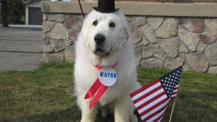 Polgármesterként csinált karriert egy minnesotai kutya