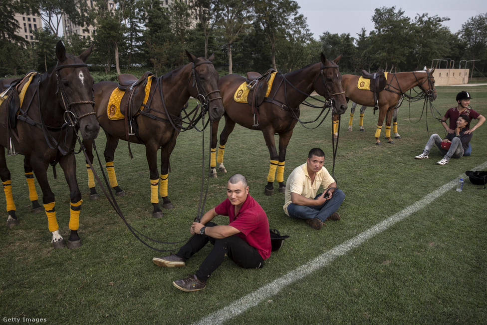 Könnyű belátni, hogy miért lett elitsport a póló. A lovak és a lótartás drága. Ha a ló sokba kerül, akkor az oktató és tanóra is. Egy jó ló tízmillió forintos tétel, és egy igazi versenyzőnek legalább négy lova van, mert a meccs minden negyedében lecseréli a meghajszolt állatát.