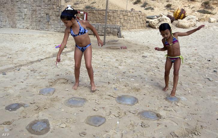 Patra vetett medúzák Netanya strandján