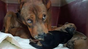Újszülött kiskutyákat mentettek a tűzoltók