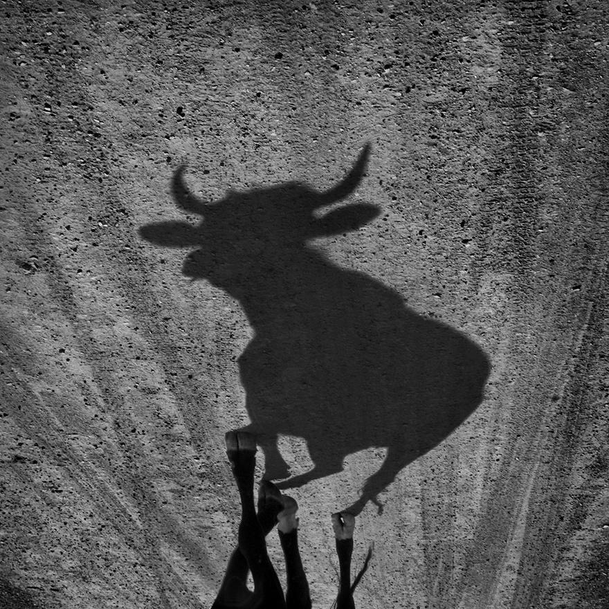 """""""És ha matadorok leszünk, és a bika felöklel, az sem öngyilkosság. Csak ha szántszándékkal állunk a bika útjába.""""                         Peruban a mai napig népszerűek a bikaviadalok, a spanyol gyarmati idők kegyetlen öröksége. Főként vidéken járnak tömegek a véres játékokra, Limában, a fővárosban már az emberek közel 80 százaléka betiltaná a bikaviadalokat."""