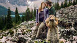 Egy mókus trollkodta szét a szerelmes fotót