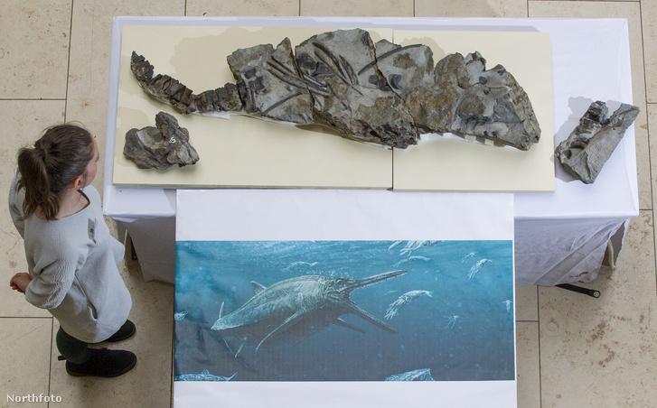 tk3s swns jurassic fossil 07