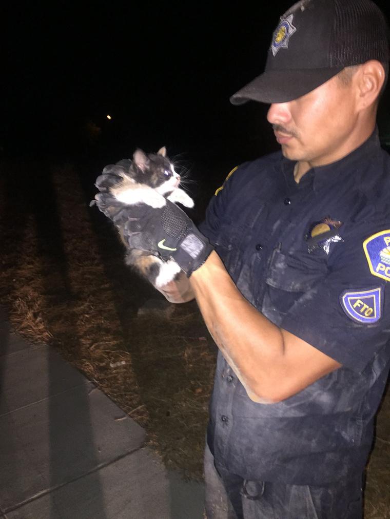Corona rendőrtiszt Burritónak nevezte el a macskát