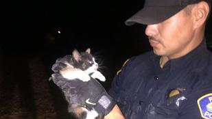 Burrito és rendőrnyávogás segített a beszorult macskának