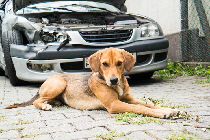 Süti kutya is szomorú. A roncs ráadásul elállta azt a helyet, ahonnan rá lehet fordulni a garázsra