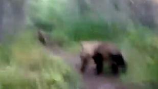 A férfi, aki elüldözött két megtermett medvét