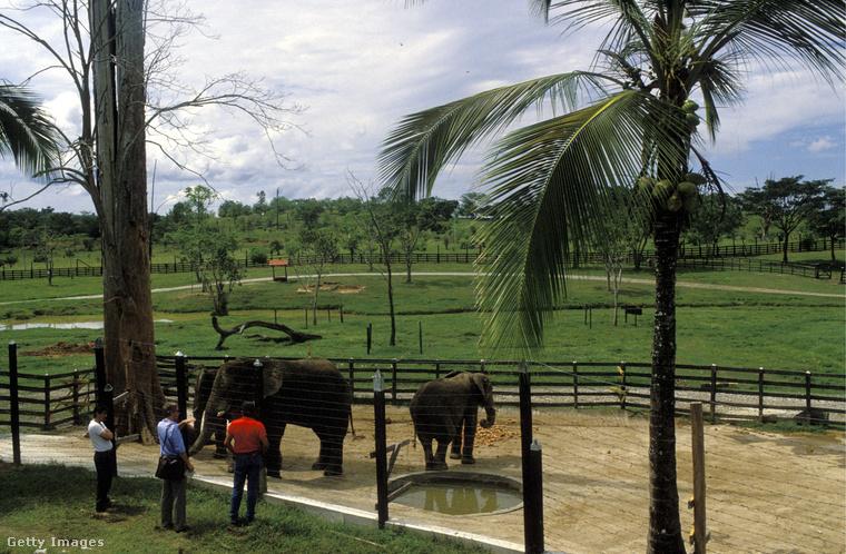 Magánállatkertjében elefántok is voltak