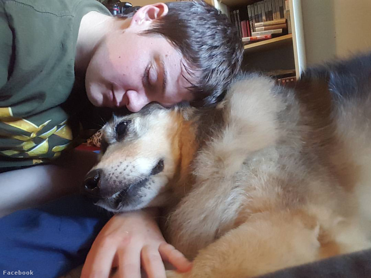 A 12 éves kutya gyógyíthatatlan rákban szenved