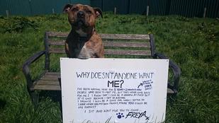 Anthony Hopkins mellett bizonyítja tehetségét a világ legmagányosabb kutyája