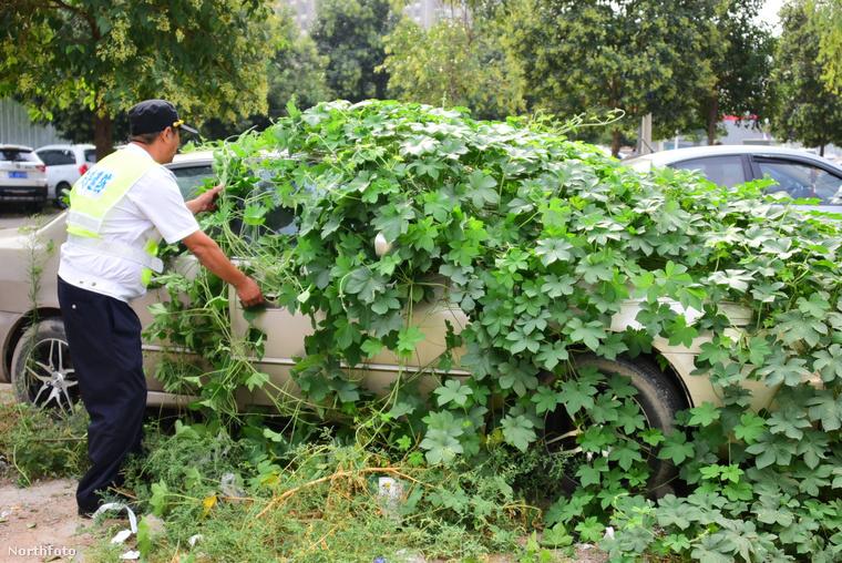 Ezért nem mindegy, hogy hol és mennyi ideig parkol az ember, mert aztán nem lehet majd kihámozni a köré nőtt dzsungelből.