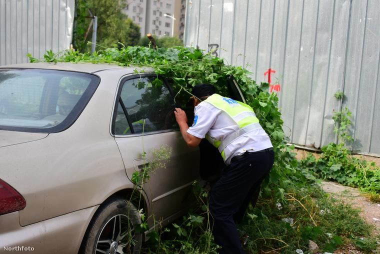 De nem csak növények költöztek be a magára maradt gépjárműbe, olykor hajléktalanok szálltak meg benne.