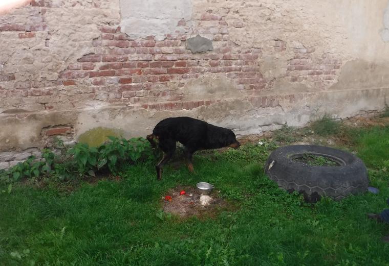 Az állat láthatóan megkönnyebbült, miután kiszabadult a kút fogságából.