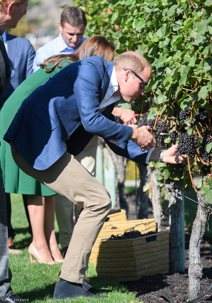 Vilmos herceg szőlőtermesztési szakbemutatót is tartott.