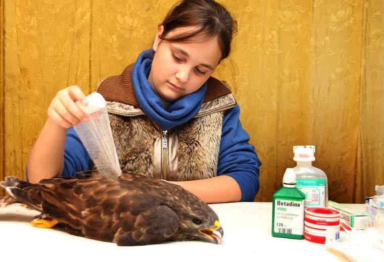 Kíra 10 éves kora óta szakszerűen helyre tudja tenni a törött szárnyat.