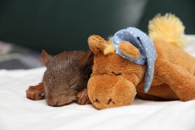 A kis mókus lepottyant a fáról és valószínűleg egy biciklis áthajtott rajta.