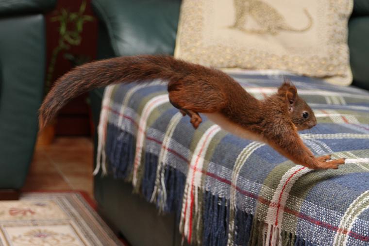 Az állat egyre mozgékonyabb, ha teljesen meggyógyul szabadon engedik.