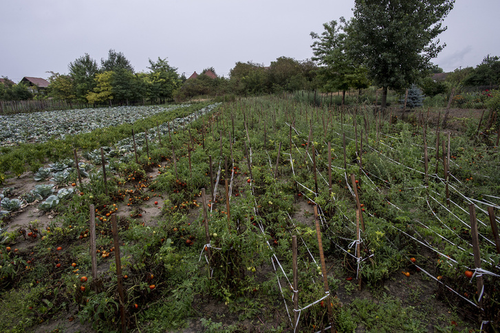 Sok kertet a külföldre költözők hagytak az önkormányzatra.