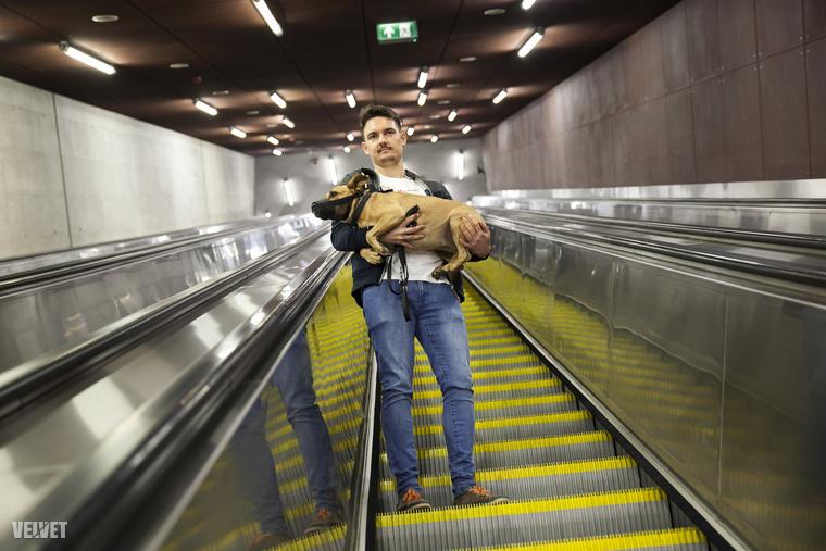 A legnagyobb veszély a mozgólépcső, ugyanis a kutyák ezt nem tudják rendeltetésszerűen használni