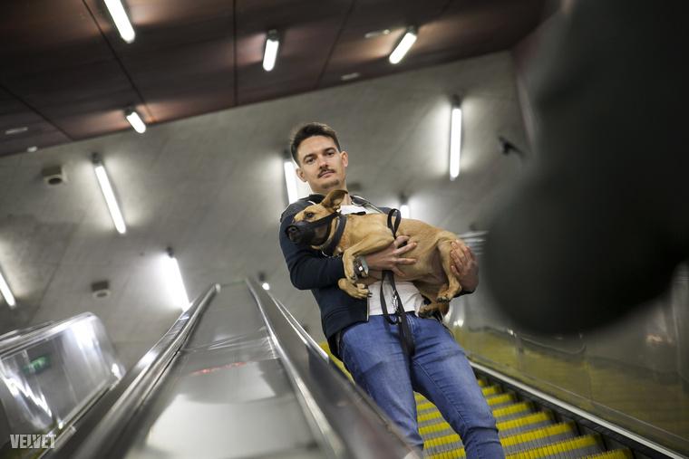 Nagyobb kutyák esetében a tartalék/álló mozgólépcsőt lehet használni, amiben az állomás személyzete tud segíteni.