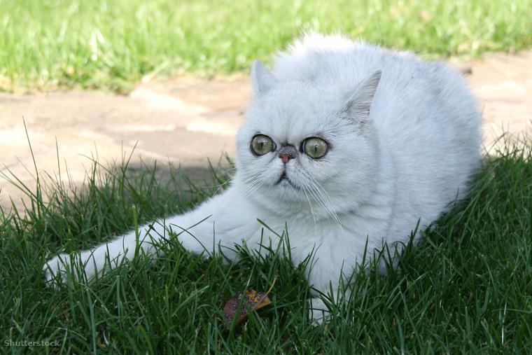 Ez egy térelválasztó cica