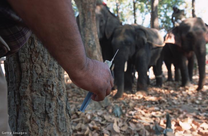 Elefántoknak szánt drog