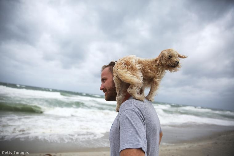 De azért vannak, akik kutyával is kimerészkednek a partra.