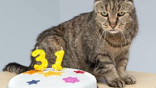 Ismerje meg Szerecsendiót, a 31 éves házi macskát!