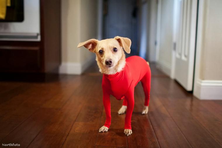Egy innovatív egyberuhával jelentkezett egy amerikai cég kutyák számára - ezzel mennének elébe annak, hogy ne legyen minden kutyaszőr a lakásban.