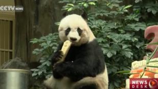 Meghalt a legidősebb fogságban élő panda