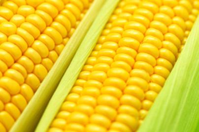 kukorica fogyás