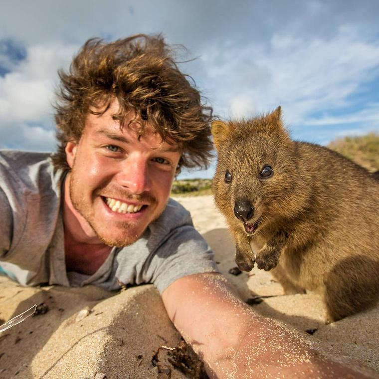 Most a kedvenc állatával láthatja, ami nem más, mint a kurtafarkú kenguru.