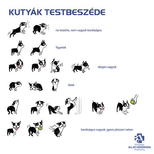 kutyatestbeszed