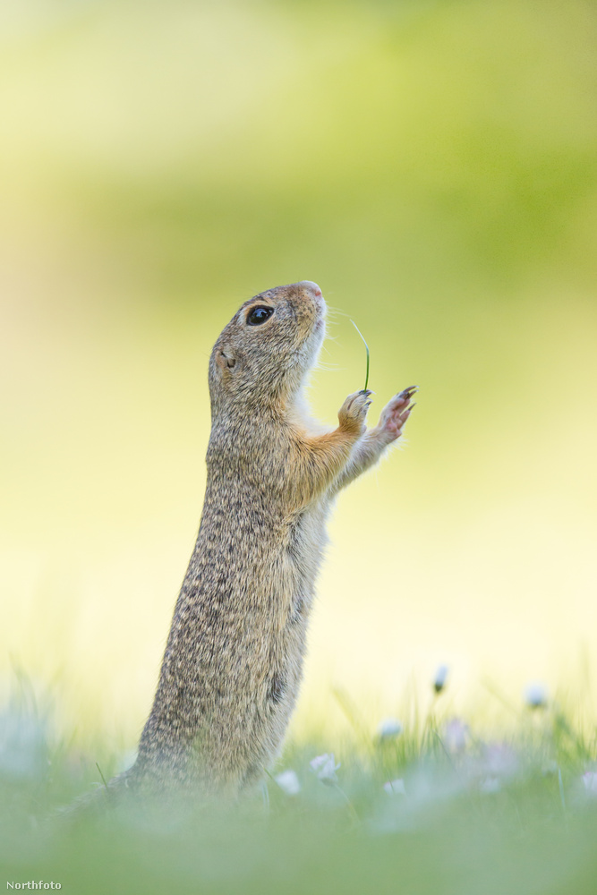 Jóságos mókusok istene, ne hagyj el!