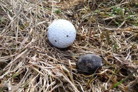 Jobbra az elsőként megtalált meteoritdarab (fotó: Juraj Toth)
